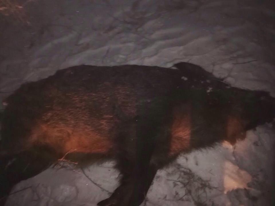 браконьеры устроили охоту на Хортице
