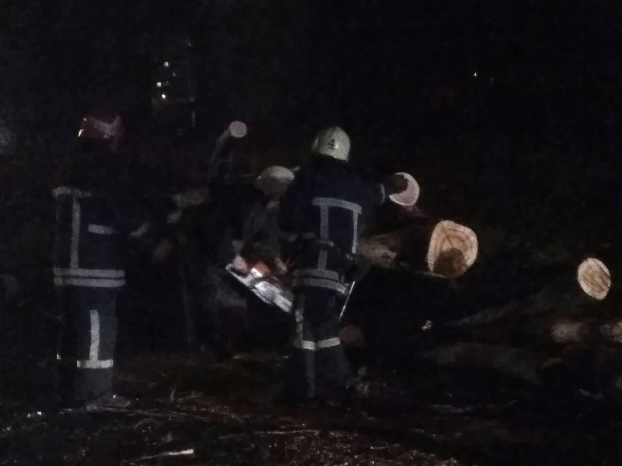 В Запорожье из-за сильных порывов ветра вырвало несколько деревьев