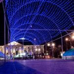 Запорожцы призывают местную власть отказаться от установки городской новогодней елки