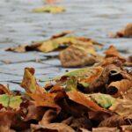В Запорожье прогнозируют потепление и сильный ветер