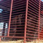 Медведей Васильевского зоопарка перевозят в Румынию