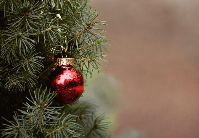 Запорожцы смогут купить новогодние елки в 25 местах