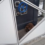 Енотовидная собака пришла в запорожский аэропорт