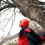 В Запорожской области спасатели ликвидировали аварийные деревья