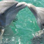 В Азовском море увеличилась популяция дельфинов