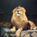Семь запорожских львов отправят в Африку