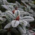 В Запорожье прогнозируют гололед и сильный мороз