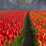 Цены на цветы в Запорожье накануне 8 Марта