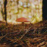 Отравление грибами: что делать и куда обращаться