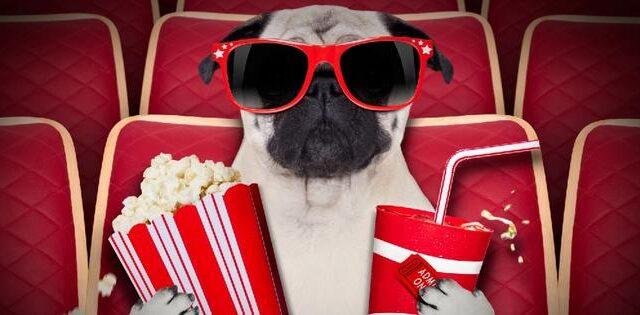 Купить билет в кино – обзор цен в Запорожье