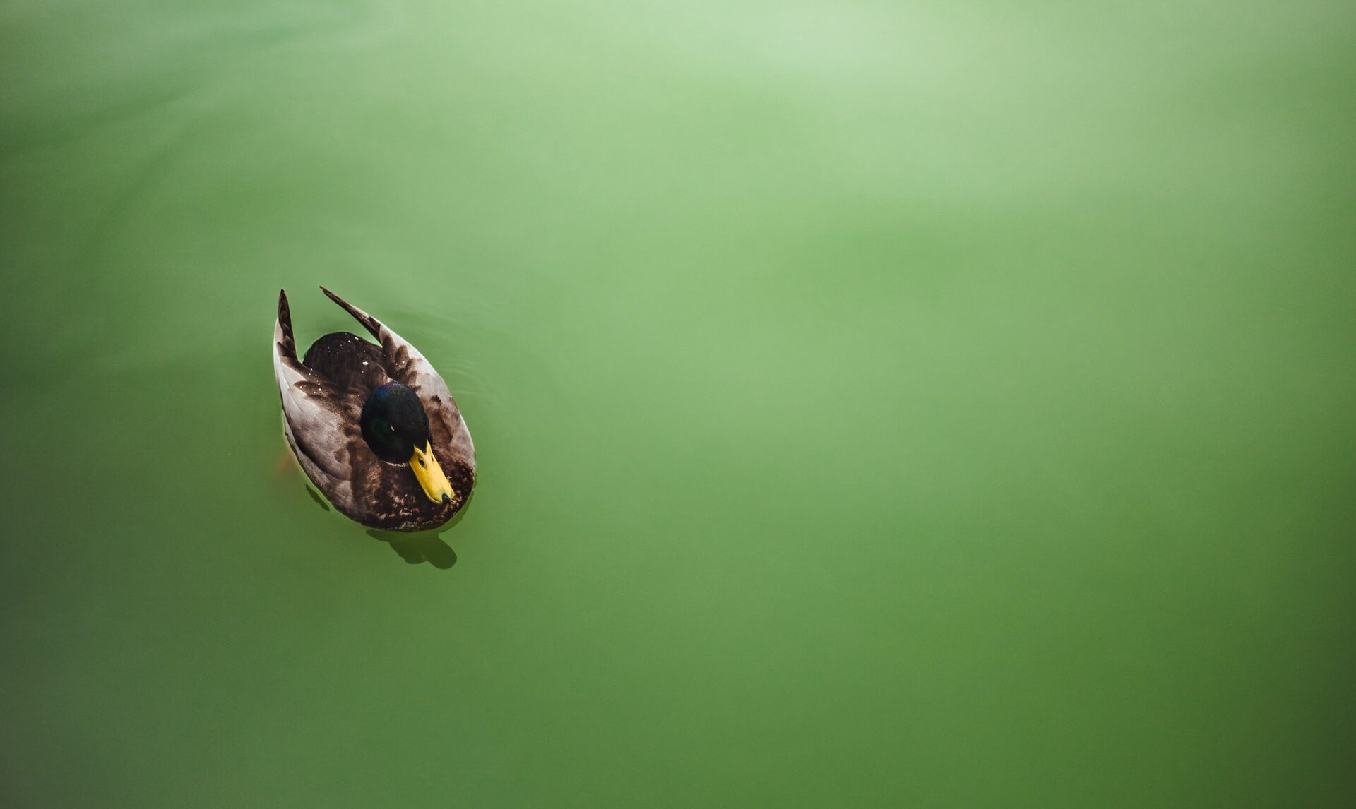 Фосфаты и пестициды убивают Днепр: экологи признали состояние реки катастрофическим