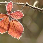 Мороз в Запорожской области достигнет 4 градусов: прогнозы